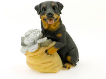 Money-box as a dog Stock Photos