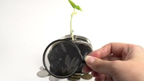 Money business finance bank concept, purse with growing plant, money tree growth, golden coins. Money business finance bank concept, purse with growing plant stock video footage