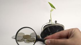 Money business finance bank concept, purse with growing plant, money tree growth, golden coins. Money business finance bank concept, purse with growing plant stock video