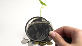 Money business finance bank concept, purse with growing plant, money tree growth, golden coins. Money business finance bank concept, purse with growing plant stock footage