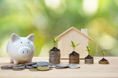 Money coin stack growing graph for the Real Estate business. Plant Growing In Savings Coins with piggy. Investment and Saving Concept stock images