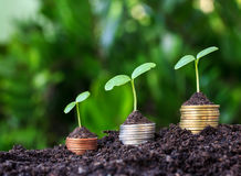 Money coin Steps.Business Finance and Money concept. Hope of investor concept.tree growing on coin Stock Image