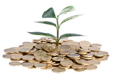 Money Concept. Plant growing from a stack of 50 cent coins, symbol for economy growth Royalty Free Stock Images