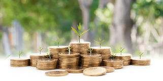 money concept money coin stack growing graph with green backgrou royalty free stock images