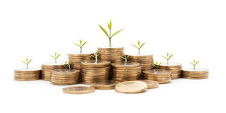 money concept money coin stack growing graph with white royalty free stock images