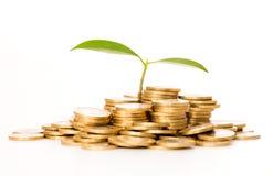 Money concept. Stock Photo