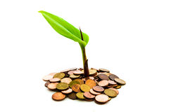 Money concept Tree on a pile of money Royalty Free Stock Photography