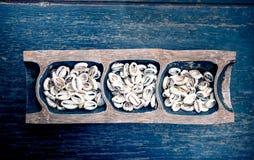 Money Cowry shells. Vintage effect Stock Image