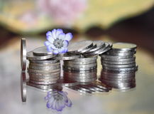 Money and delicate flower. Lot of coins on a glass table with a delicate flower Royalty Free Stock Photo