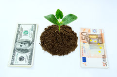 Money dollars, euro and green sprout Stock Photo