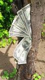 Money dollars tree Royalty Free Stock Image