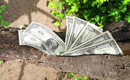 Money dollars tree Stock Photos