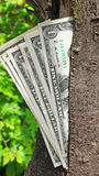 Money dollars tree Royalty Free Stock Photo