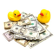 Money and Duck Toys Royalty Free Stock Photography