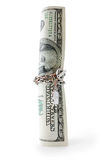 Money entwisted by chain Royalty Free Stock Image