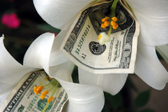 Money and flower 2. Money inside two flowers stock image