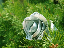 Money flower cristmas concept Royalty Free Stock Images