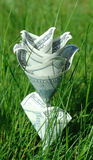 Money flower in green grass Stock Images