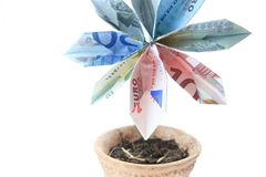 Money flower in a pot. Flower made of money in a pot, isolated Stock Photo