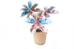 Money flower in a pot. Flower made of money in a pot, isolated Royalty Free Stock Photo