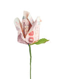 Money flower Royalty Free Stock Image