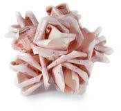 Money flower Stock Images