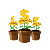 Money flowers Stock Photo