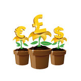 Money flowers Stock Photos