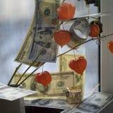 Money On Flowers Stock Photos