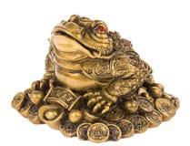 Money frog Stock Photo