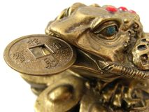 Money Frog. Symbolizing wealth and prosperity Royalty Free Stock Photos