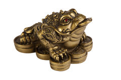 Money frog Royalty Free Stock Image
