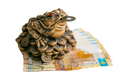 Money frog Stock Photos
