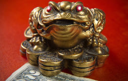 Money frog and two dollars. Stock Image