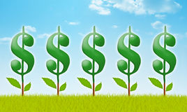 Money Garden. With dollar plants Royalty Free Stock Photography