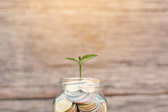 Money in a glass jar with green plant. royalty free stock photography