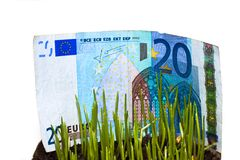 Money At Grass Royalty Free Stock Photos