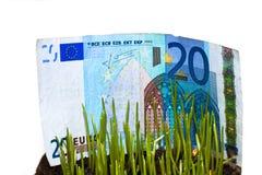 Money At Grass Royalty Free Stock Photos