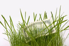 A money is in a grass Stock Photography