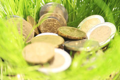 Money in grass. Stock Photo