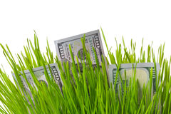 Money in grass Royalty Free Stock Image