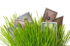 Money in grass Stock Image