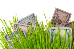 Money in grass Royalty Free Stock Photos