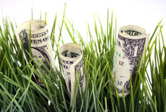 Money in the green grass. One dollar bills in the green grass Stock Image