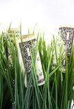 Money in the green grass. One dollar bills in the green grass Royalty Free Stock Photo