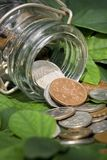 Money on green leaves royalty free stock image