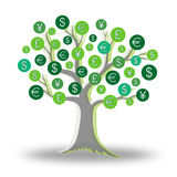 Money green tree growing currency Royalty Free Stock Images