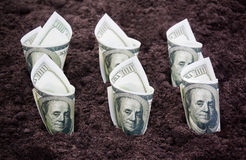 Money in the ground Royalty Free Stock Photography