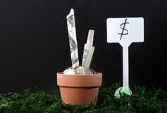 Free Money Groving Inside Pot With Dollar Sign On Side Royalty Free Stock Photos - 169595708