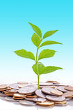 Money grow royalty free stock image